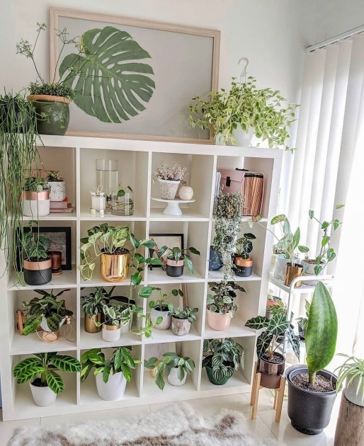 Stylish Indoor Pot To Beutify House Photo