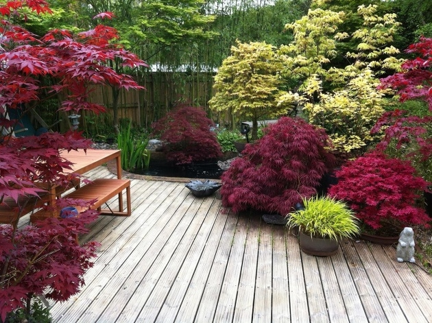 Stylish Japanese Garden Plants Picture