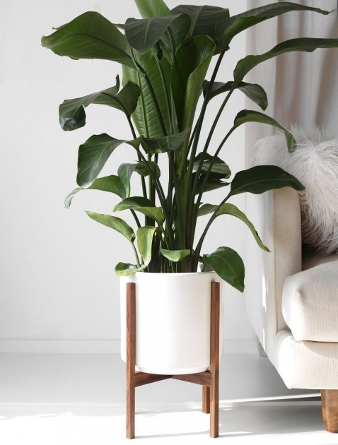 Stylish Large Indoor Planters Image