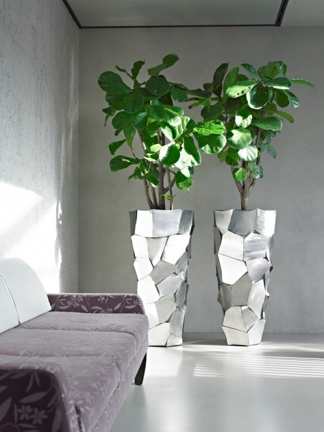 Stylish Large Indoor Planters Picture