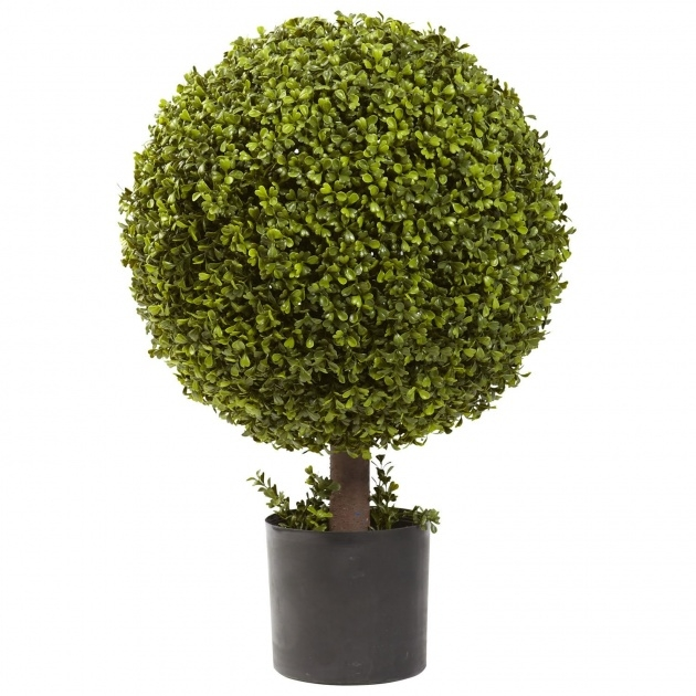 Stylish Outdoor Topiary Plants Picture