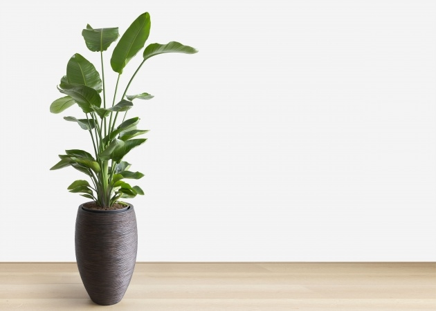 Stylish Plant Plant Picture