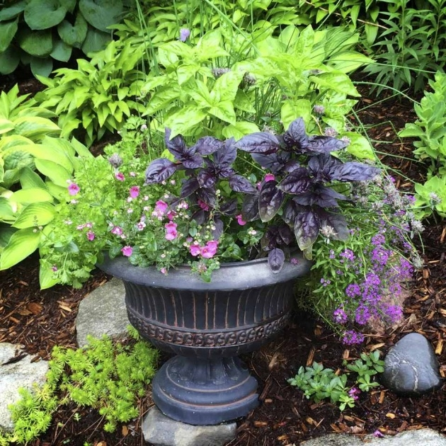 Stylish Planting Herbs In Pots Image