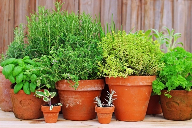Stylish Planting Herbs In Pots Picture