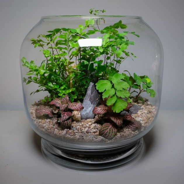 Stylish Plants In Glass Bowl Image