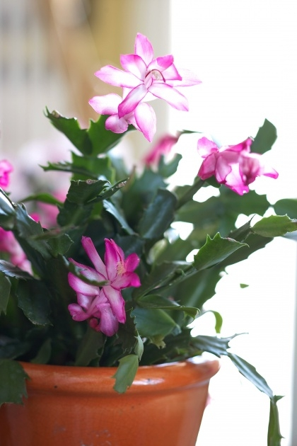 Stylish Small Indoor Plants That Flower Photo