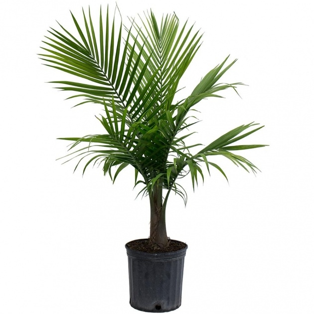 Stylish Tree Plant Pot Photo