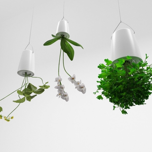 Stylish Upside Down Hanging Plants Image