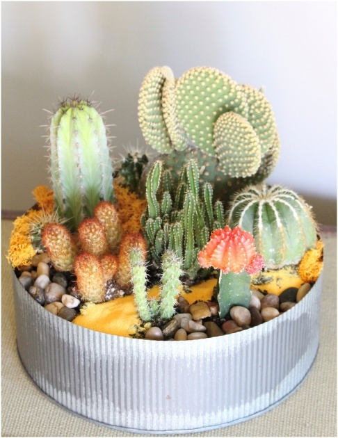 Super Cool Cactus Planter Ideas Photo
