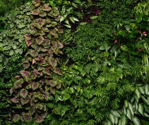 Super Cool Green Wall Plants Image