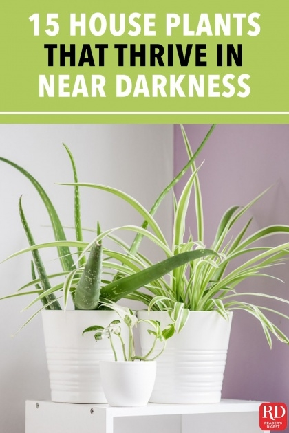 Super Cool Houseplants That Cool Air Image