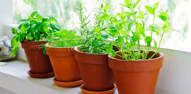 Super Cool Planting Herbs In Pots Picture