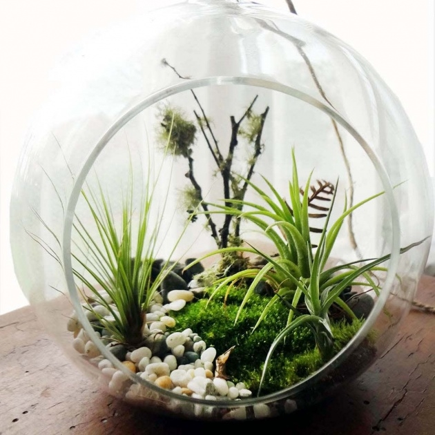 Super Cool Plants In Glass Bowl Picture