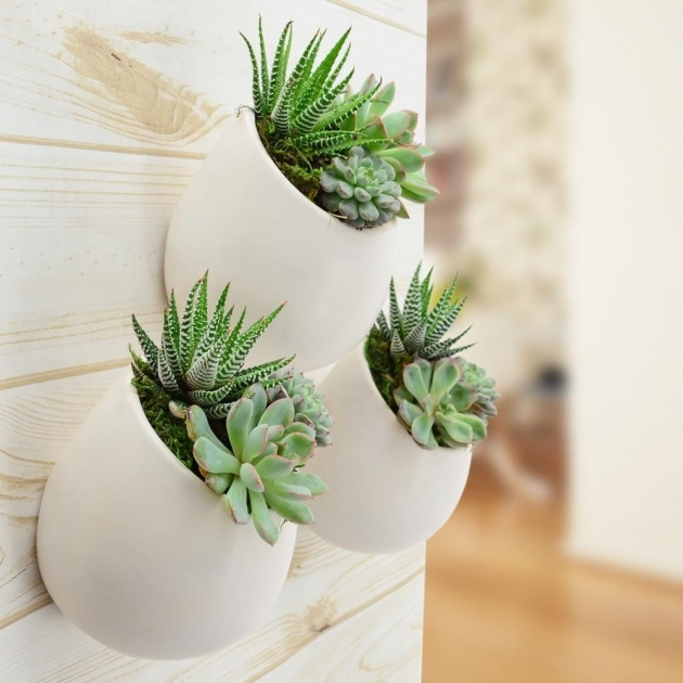 Super Cool Succulent Wall Planter Image