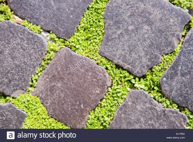 Surprising Low Profile Ground Cover For Between Pavers Photo