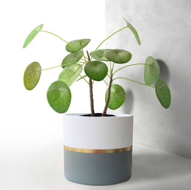 Surprising Modern Indoor Planters Image