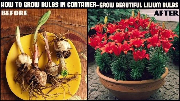 Surprising Planting Flower Bulbs Image