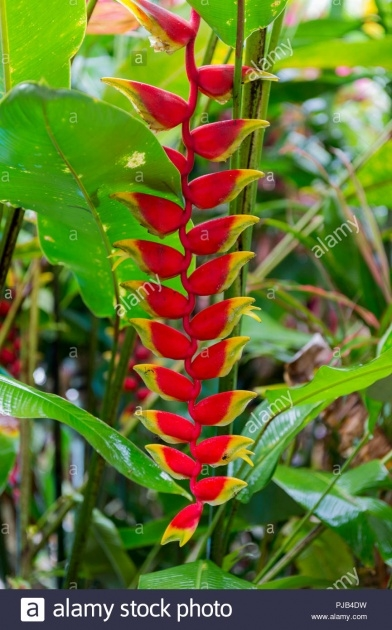 Surprising Rainforest Plants Image