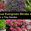 Small Outdoor Shrubs That Dont Need Light