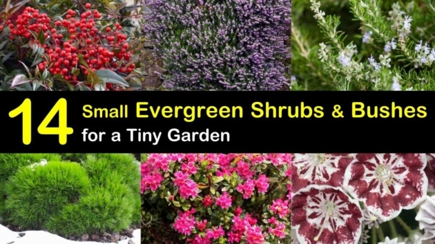 Surprising Small Outdoor Shrubs That Dont Need Light Photo