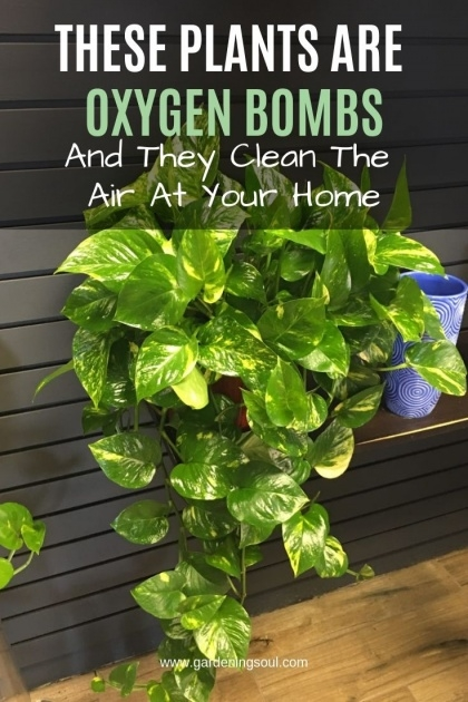 Top Fantastic House Plants Photo