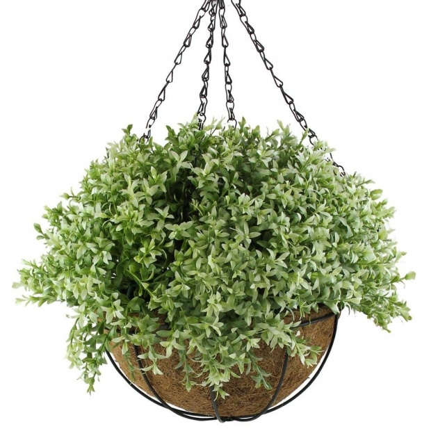Top Hanging Basket Foiliage Photo