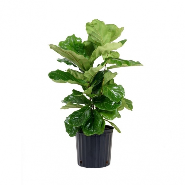 Top Home Depot Plants Picture