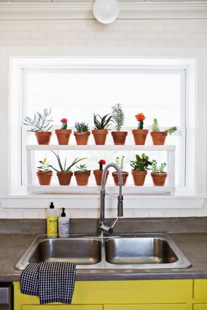 Top Kitchen Window Plants Picture