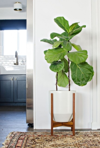 Top Large Indoor Plant Pots Photo