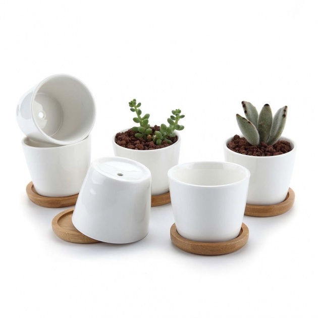 Top Mini Plant Pots Image