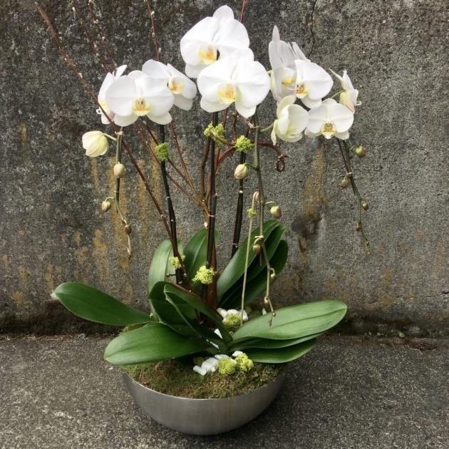 Top Orchid Plant Pot Photo