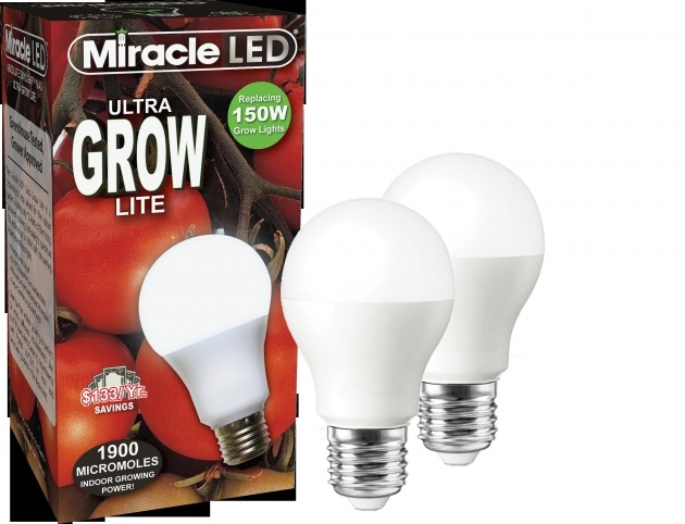 Top Plant Light Bulbs Picture