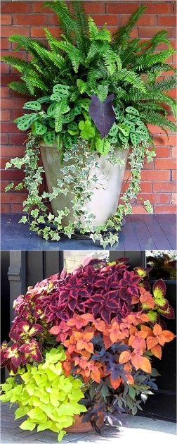 Top Plants For Planters In Shade Photo