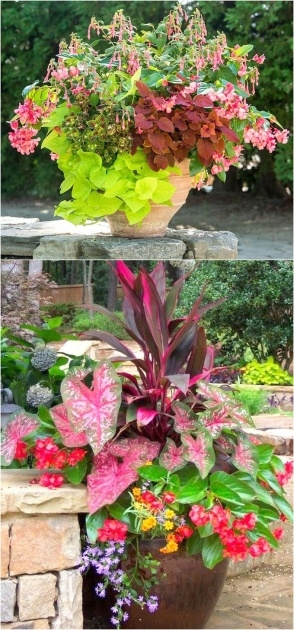 Top Plants For Planters In Shade Picture
