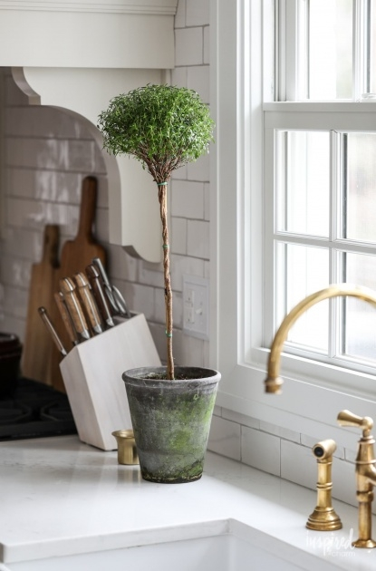 Top Plants In Home Decor Photo