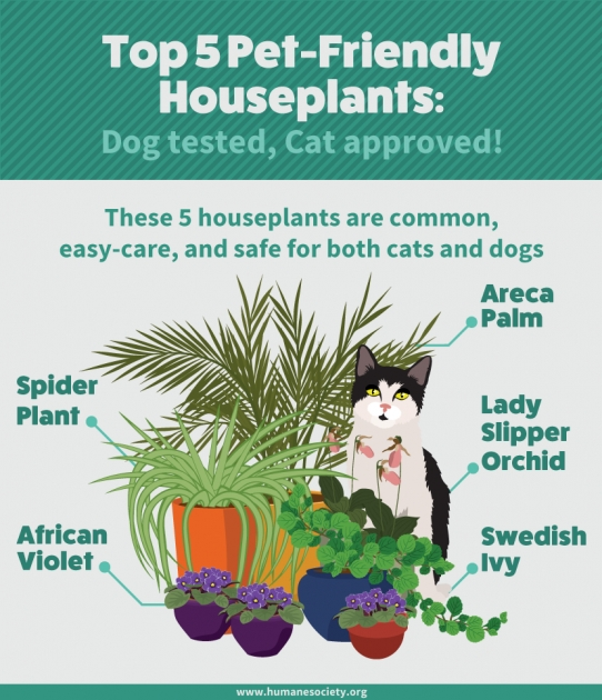 Top Safe Flowers For The Garden With Cat Photo