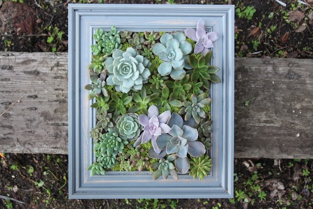 Top Succulent Wall Planter Picture