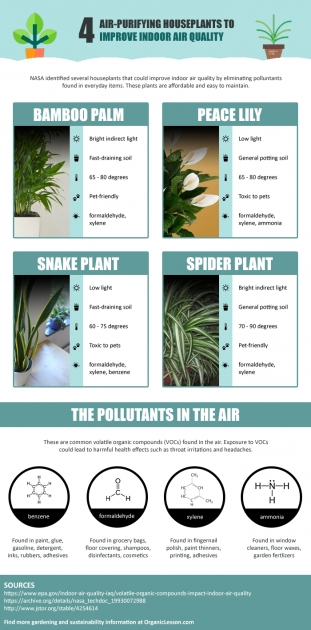 Wonderful Air Purifying Indoor Plants Photo