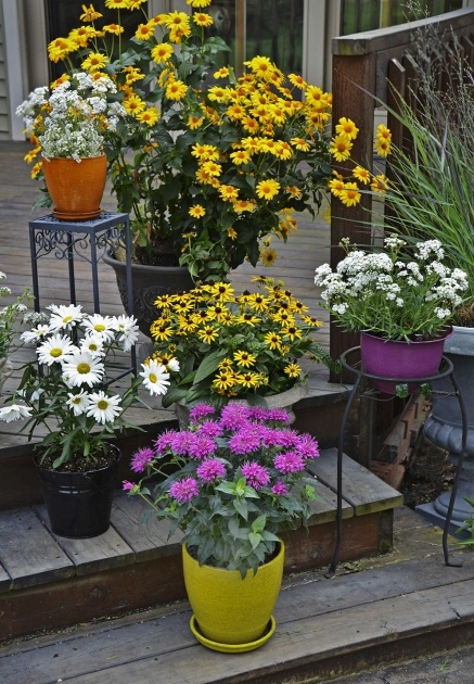 Wonderful Hanging Perennials Flowers For Containers Picture