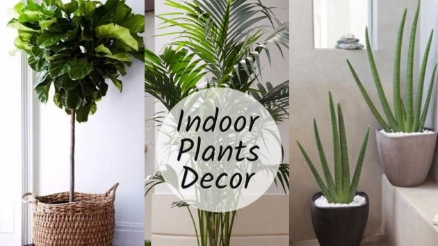 Wonderful Plants In Home Decor Picture