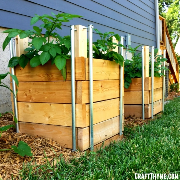 Wonderful Potato Planter Box Photo
