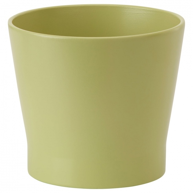 Amazing Green Plant Pot Picture