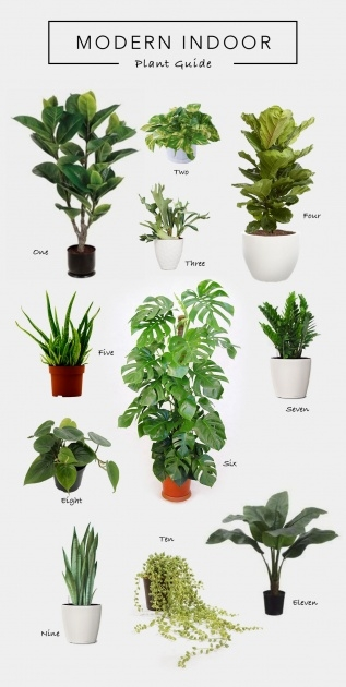 Amazing Modern Indoor House Plants Picture
