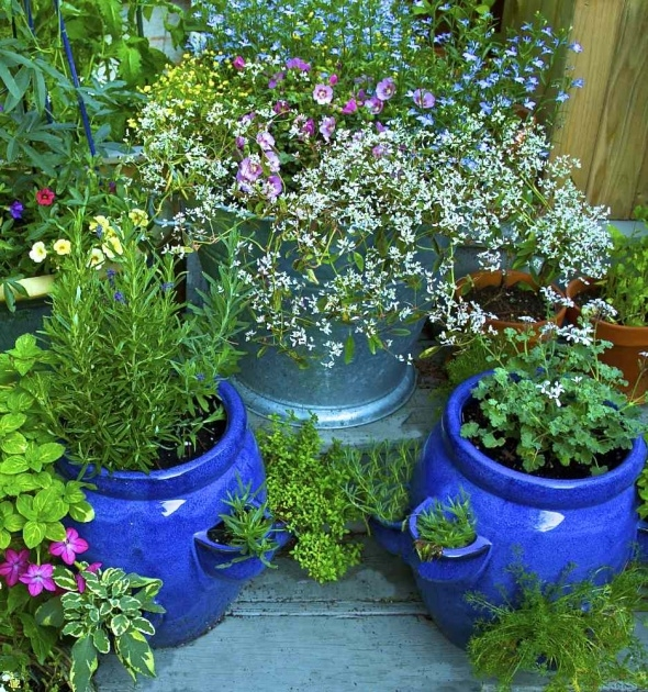 Amazing Planting Herbs In Pots Photo