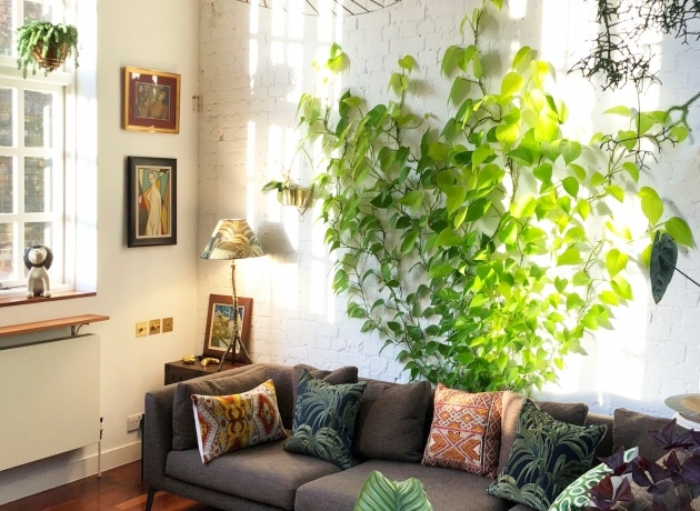 Amazingly How To Make A Plant Wall Picture