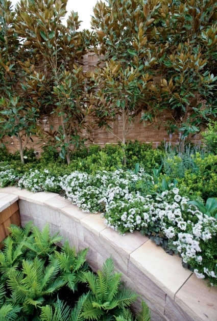 Amazingly Plants For Small Gardens Image