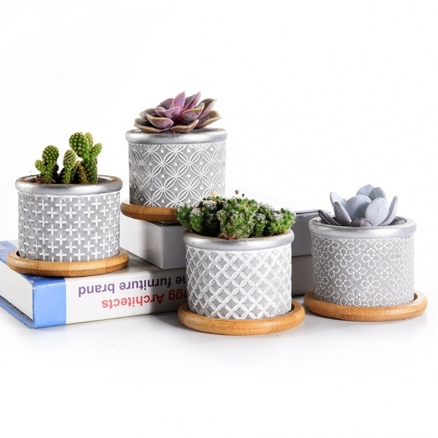 Awesome Cactus Plant Pot Picture