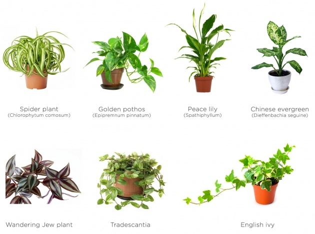 Awesome Green Wall Plants Photo