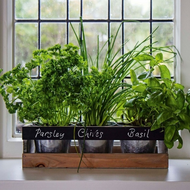Awesome Indoor Herb Planter Image