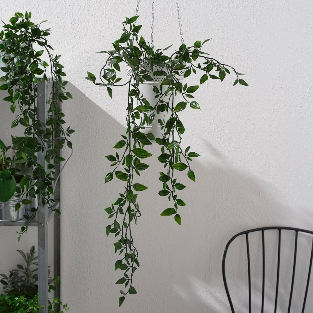 Awesome Outdoor Hanging Plants Picture